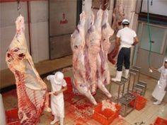 สุดยอด!! ขั้นตอนการชำแหละวัว ด้วยเครื่องจักรอัตโนมัติ  Machinery dissect...