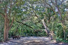 Insider's Guide to St. Augustine, Florida: Anastasia State Park Campground, book one of their primitive campgrounds when a show you want to see is happening at the Amphitheatre. You can start your day at the beach, pre-game at your campsite with friends, then walk over to the back door of the Amphitheatre for the show, and only have to stumble into the woods out back afterwards. It's a blast. www.eujax.com #eujax #singoutloud