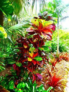 Cayman Islands ... vibrant colors everywhere!