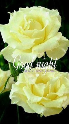 good night images with flowers Good Night Friends Images, Good Night Love Quotes, Good Night Prayer, Good Night Blessings, Good Night Messages, Good Morning Images, Good Night Angel, Beautiful Good Night Images, Good Night I Love You