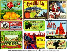 Printed Citrus Crate Labels Kitchen Wall Art by RarePaperDetective