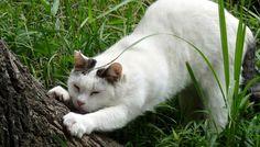 のび~っとストレッチする猫(B-001)猫写真-横浜 #猫写真