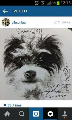 Mon Iti mon super chien dessiner par Gibson a suivre sur Instagram