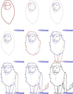 Below Is A Step By Step Tutorial On How To Draw A Realistic Lion