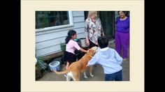 VISITING DOGS AND BIRDS - DINESH VORA