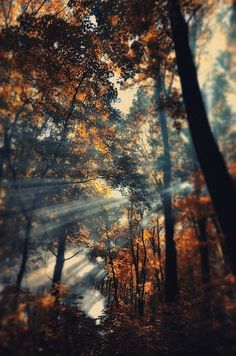 Light in the trees.