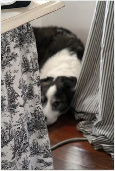Such a sweet picture ... black toile and stripes hiding the dog in his favorite spot.  This looks like a dog we had and loved...