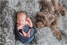 mini Australian labradoodle and newborn baby - dog and baby picture - so cute!!