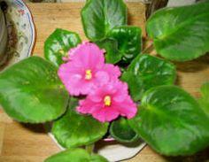 semillas nombres verde plantas hacer cmo llegar africanos violetas banquetes de boda