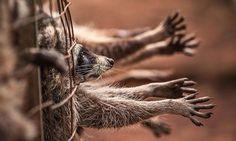 PÉTITION : Demandons la fermeture des 6000 fermes à fourrure en Europe pour mettre un terme à la détresse des millions d'animaux massacrés par an ! 30 Millions d'Amis (Officiel)