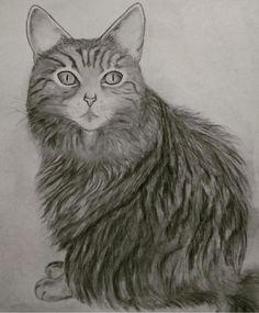 #Drawing cat