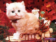 imagens de animais de natal - Pesquisa Google