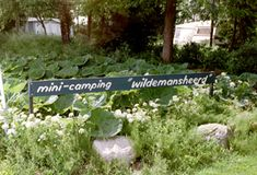 camping Wildemansheerd Schildwolde