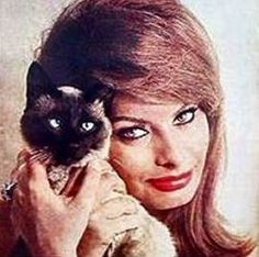 Siamese Cat and Sophia Loren