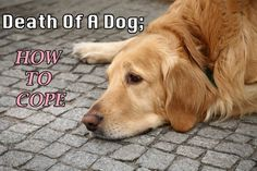 How to deal with the death of a dog. Public and Personal experience! =(