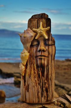 World Within Driftwood Sculpture with Shells and by ShapingSpirit