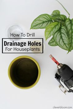 Learn How to Drill Drainage Holes for Houseplants in all of your thriftstore finds - Clever Bloom #houseplants #indoorplants #pots #ceramics #drainageholes