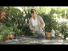 Video: How to Take Care of a Tomato Plant Terrarium | eHow