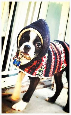 .he needs an handsome sweater like this!