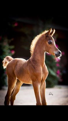 ~Beautiful Lil Horse~