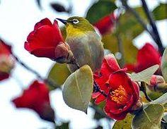 동백꽃 새에 대한 이미지 검색결과