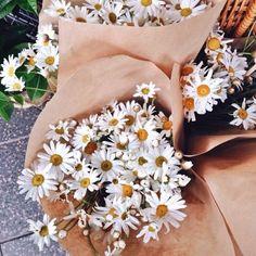 Delicate little daisies - Vicki Archer //  https://www.instagram.com/vickiarcher/