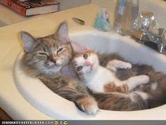 What are these two cats feeling? – photos for working on emotions -  -  Pinned by @PediaStaff – Please Visit http://ht.ly/63sNt for all our pediatric therapy pins