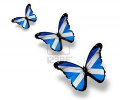 Picture of Three Scottish flag butterflies, isolated on white stock photo, images and stock photography. Independence Images, Scottish Independence, Scotland Tattoo, Scottish Tattoos, Thistle Tattoo, Scottish Culture, Butterfly Books, Tattoos For Women Half Sleeve, Tattoo Designs