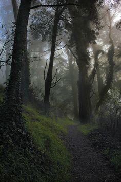 Forêt obscure -