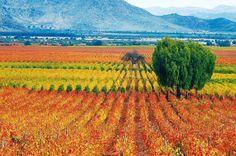 A Viña Caliterra, no Valle de Colchagua, no Chile