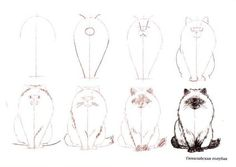Learn to draw cats. Discussion on LiveInternet - Russian Service Online Diaries