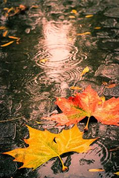 Autumn leaves on a wet day by Nick Stubbings on Leaf Photography, Autumn Photography, Autumn Rain, Autumn Leaves, Late Autumn, Rain Wallpapers, Autumn Scenes, Autumn Aesthetic, Fall Wallpaper