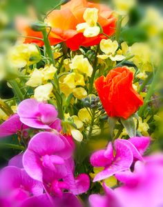 Color rainbow bold flower arrangement garden