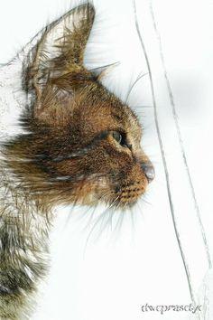 cat sketch art by BlackheartLibra on DeviantArt