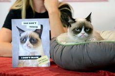 Животные в новостях: мастер-класс рыбалки, унылый кот на бумаге и ПДД для аистов