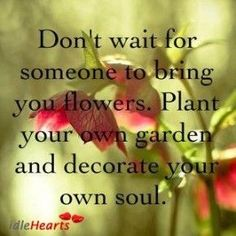 Time to Find - or Create - Work You Love? Let's discuss your career situation, goals, and implement a strategy: Positive Quotes Images, Inspirational Quotes, Indoor Flowering Plants, Beautiful Nature Pictures, Waiting For Someone, Its Friday Quotes, Garden Quotes, Planting Flowers, Flowers Garden