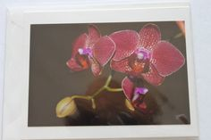 Orchid Photo Note Card   Orchid Bland Note Card by manukai on Etsy