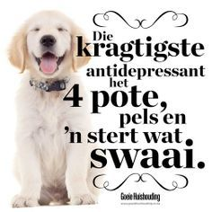 my 4 potige Clever Quotes, Cute Quotes, Funny Quotes, Dog Quotes, Words Quotes, Sayings, Afrikaanse Quotes, Bestest Friend, Wedding Quotes