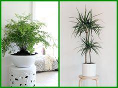 14 pokojových rostlin do stínu a polostínu My New Room, House Plants, Flowers, Gardening, Garten, Houseplants, Royal Icing Flowers, Lawn And Garden, Flower
