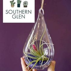 Searching for that last minute Valentines gift? Come to the Market from 11-2 tomorrow and see what Southern Glen's Pop Up Shop has to offer!  Gifts including this Air Plant Terrarium and more will be available so come and take a look!