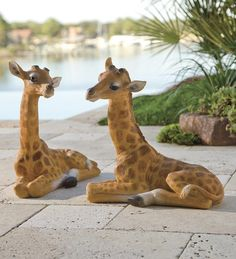 Baby Giraffe Garden Statue-would love to section off my back yard to make it look like a safari..love these animals