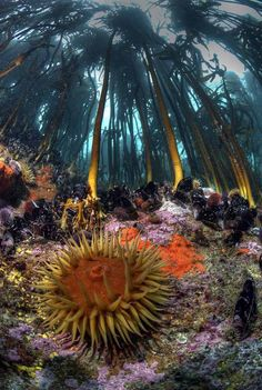 Photo of the Day: Kelp Forest