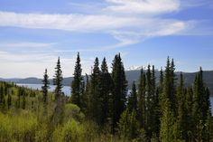DESPITE STRAIGHT LINES posted a photo:  This photograph was taken at an altitude of Eight hundred and forty seven metres at 14:25pm on Sunday 15th May 2016 off Stewart-Cassiar Highway 37 on the shoreline of Dease Lake, a small largely First Nations community in the Cassiar Country of Northern Interior of British Columbia, Canada.  .  .  Nikon D800 32mm 1/160s f/11.0 iso100 RAW (14Bit) Hand held. Nikon back focus button enabled. AF-C Continuous point focus with 3-D tracking. Manual exposure…