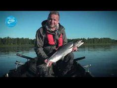 Lohenkalastus Tornionjoella - Pello Lappi Suomi - Tornionjoki kalastus - lohi - YouTube