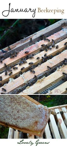 January Beekeeping - checking the hive for disease and honey stores #beekeeping