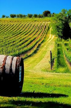 Barrel in Vineyard Volterra, Province of Pisa, region of Tuscany , Italy Pisa, Places To Travel, Places To See, Magic Places, Under The Tuscan Sun, Tuscany Italy, Sorrento Italy, Italy Italy, Naples Italy