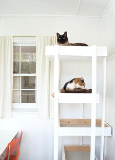 A Georgia Home Filled with Love, Art and Plenty of Pets   Design*Sponge