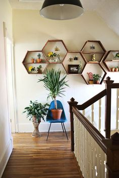 Wonderful-wooden-hexagon-floating-shelf-form-on-wall-with-some-small-pot-plants-added-black-pendant-light-idea-that-sustain-the-freshness-in-interior-design – Primadr #home interior