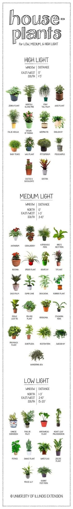 So useful right now: a visual guide to houseplants, according to their need for light. #indoor #plants