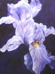 Mystic- lilac Iris on a dark Purple backdrop. Big flower canvas by Anita Nowinska